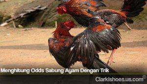 Menghitung Odds Sabung Ayam Dengan Trik